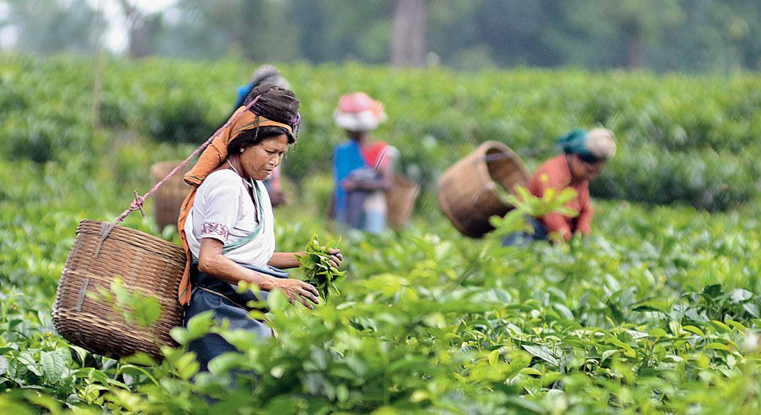 Industries and Tea Gardens resume operations in Assam