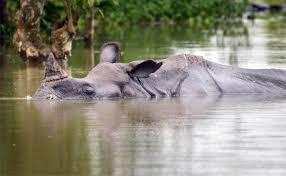flood in Kaziranga