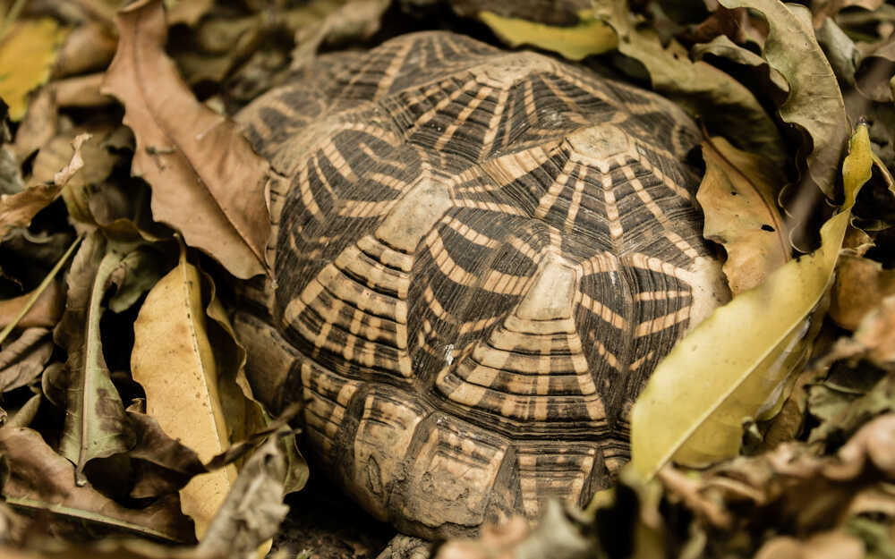 Illegal trade of turtle meat was found in DhubriAssam