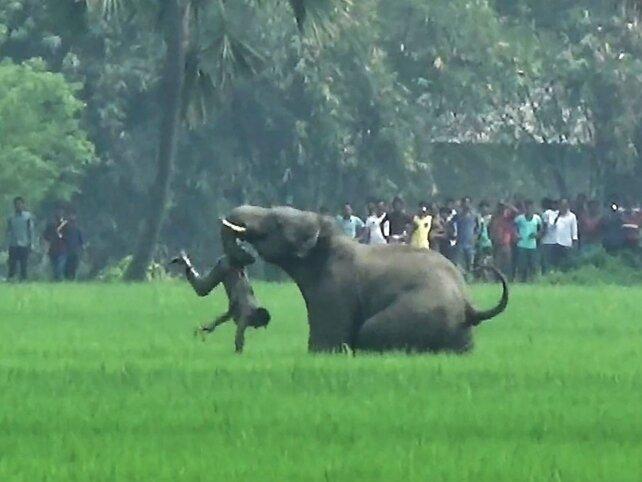 wild animals in Bengal