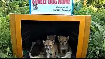 A man builds tiny houses for stray dogs using discarded TV sets