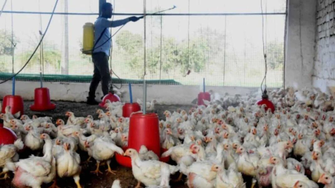 Manipur govt bans poultry from other states in light of bird flu