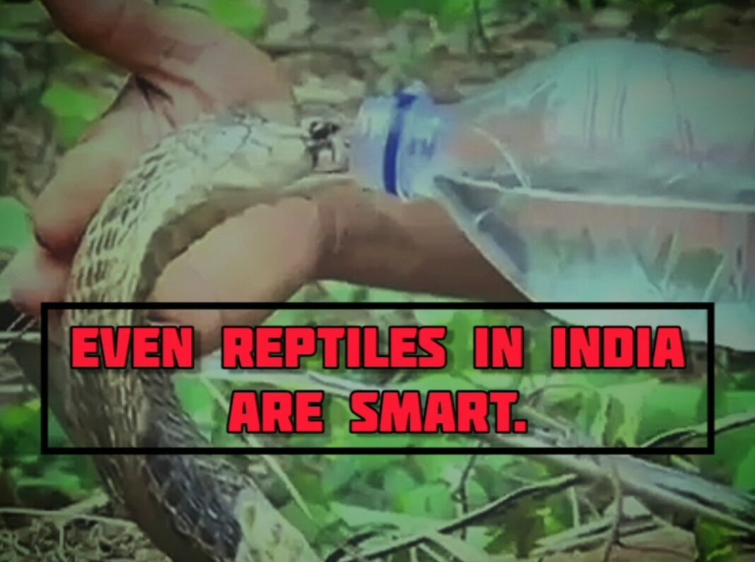 scary snake drinking water from a bottle