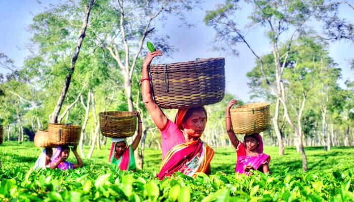 Assam daily wage